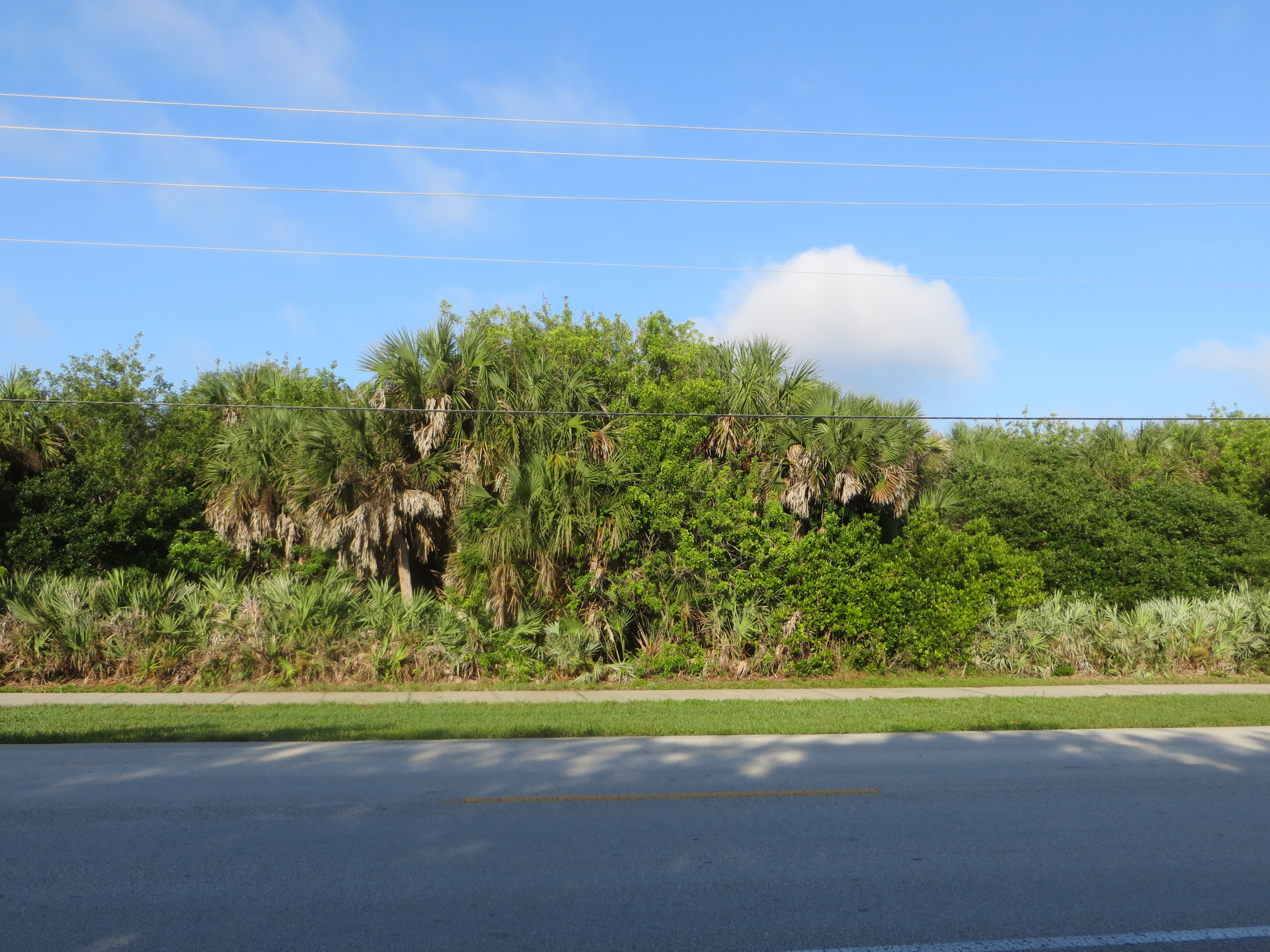 Dense growth lining the road - nice shade in the early morning,  as we headed north.